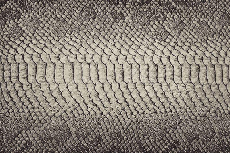 Snake skin background. Close up stock image