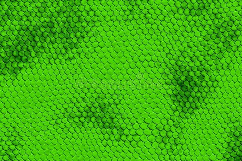 Snake skin. Background made of snake skin stock image