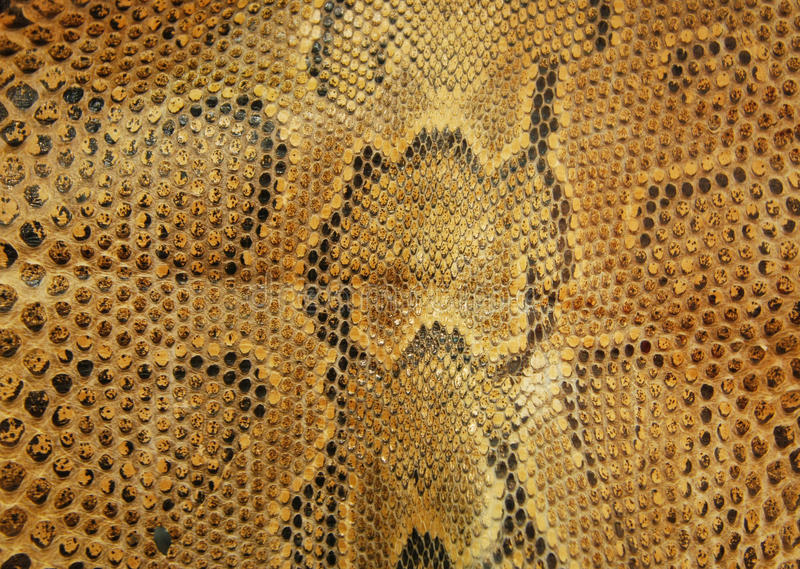 Snake skin. Brown and black colors royalty free stock photography