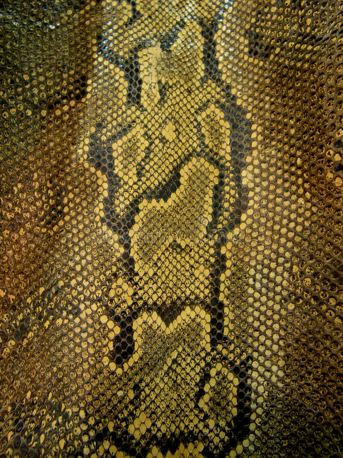 Snake skin. Brown and black colors stock images