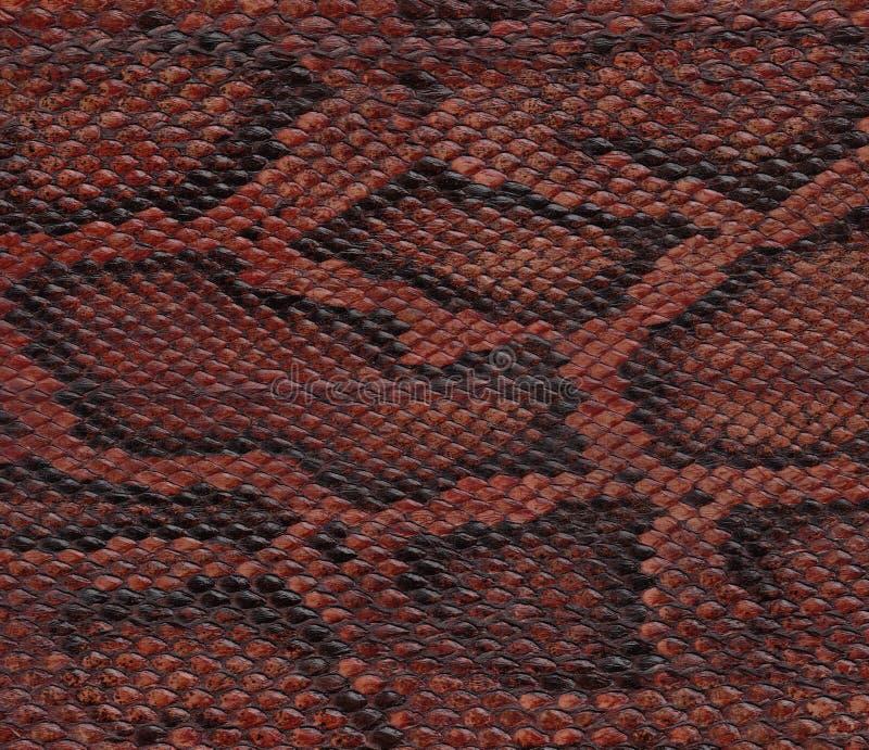 Snake skin closeup. Snake pyton natural skin closeup stock photo