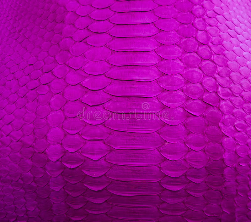 Snake skin. Color Snake skin as background stock photos