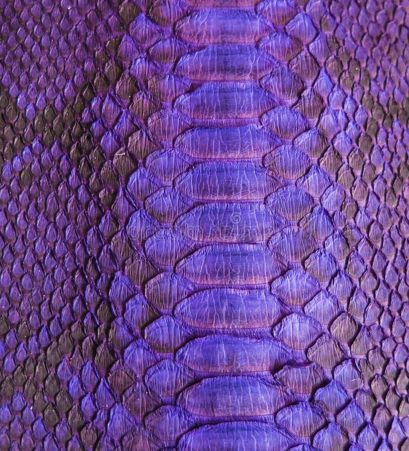 Snake skin. Color Snake skin as background stock images