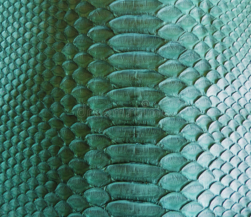 Snake skin. Color Snake skin as background stock image