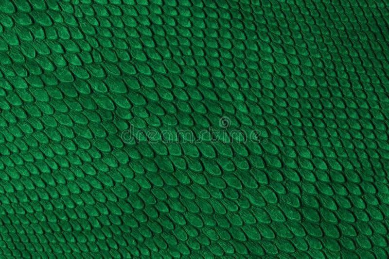 Snake skin. Green snake skin for background royalty free stock photography