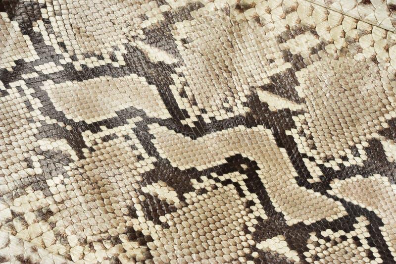 Snake Skin Leather Stock Photos