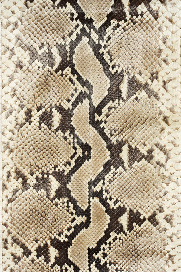 Snake skin leather (vertical) stock image