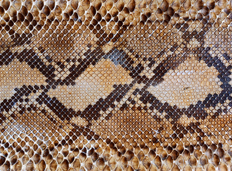 Snake skin pattern background stock images