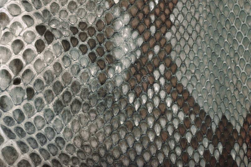 Snake skin texture. Gray snake skin texture background royalty free stock image