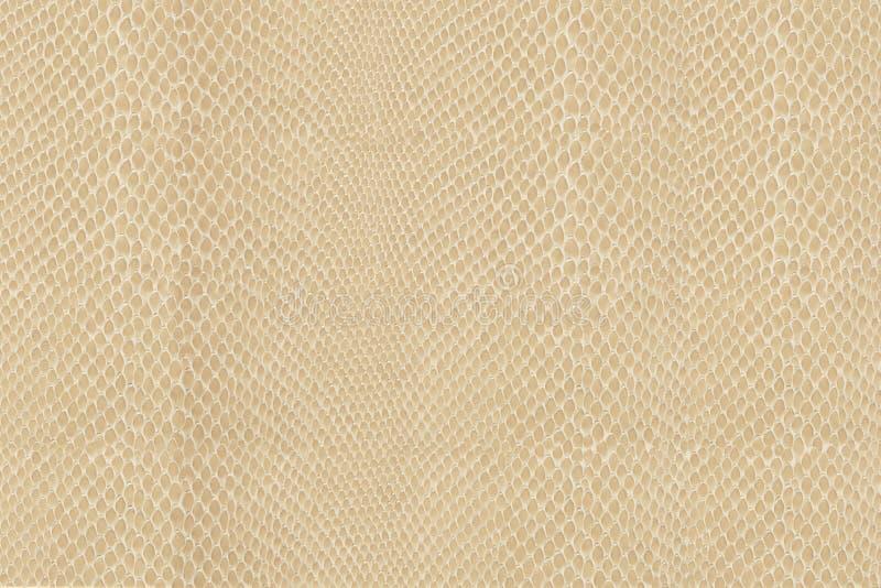 Snake skin texture. High quality snake skin pattern royalty free stock image