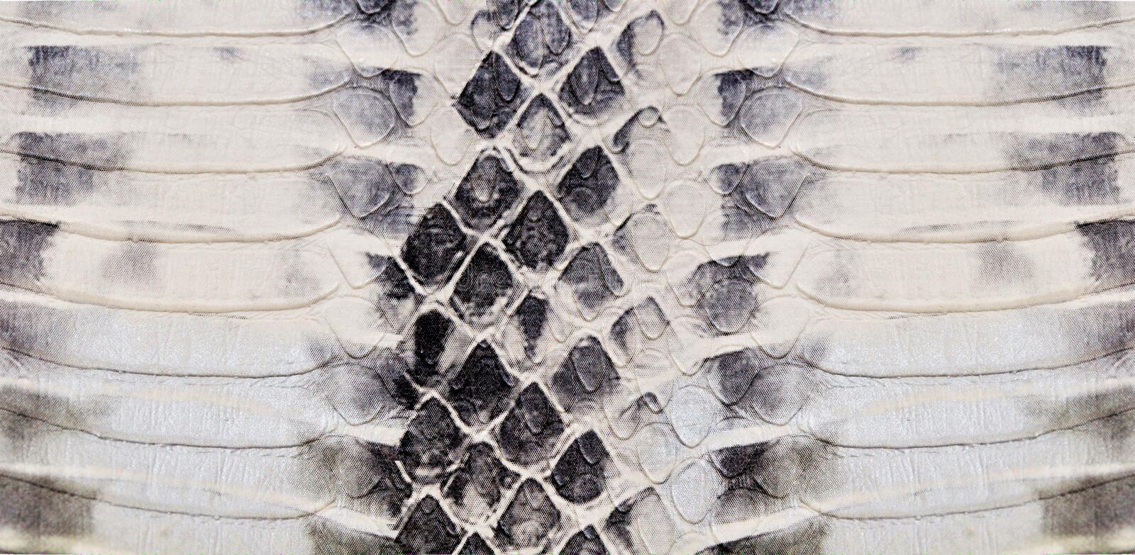 Snake skin texture stock photos