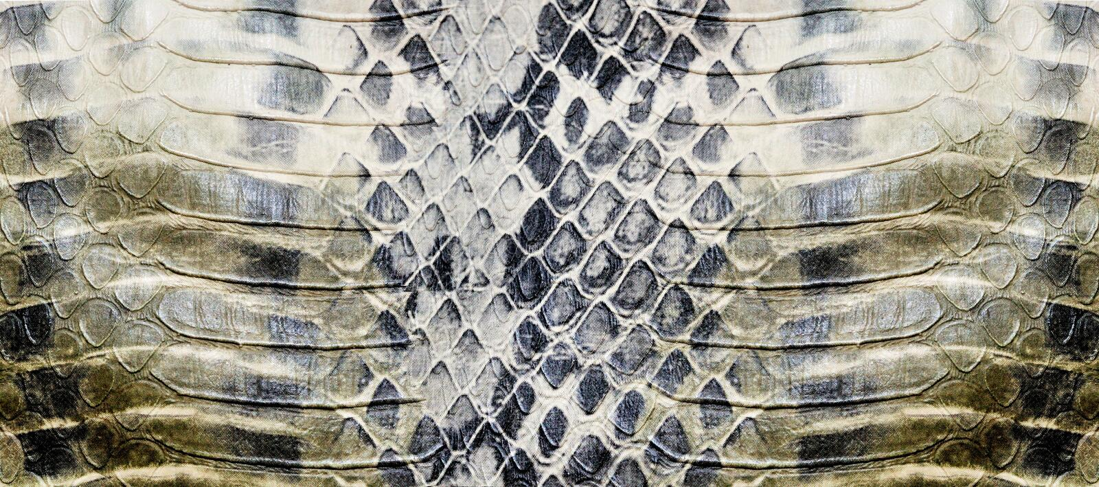 Snake skin texture royalty free stock photo