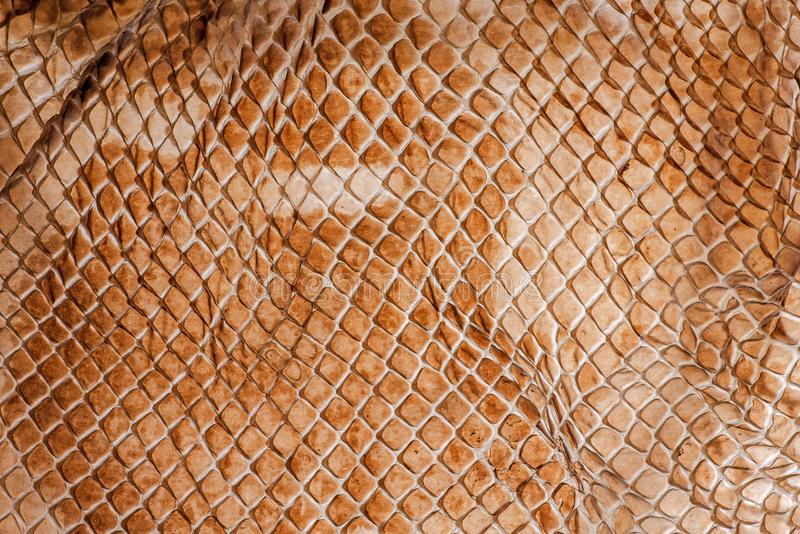 Snake skin - texture. Close up in the detail stock photography