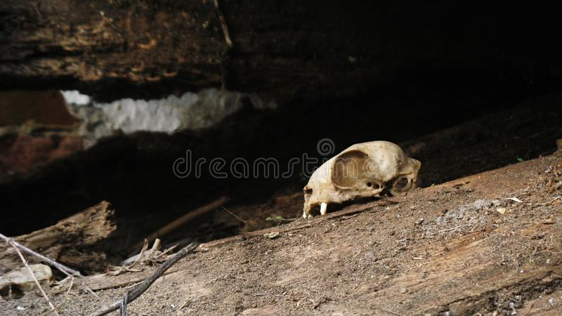 Snake skull royalty free stock images