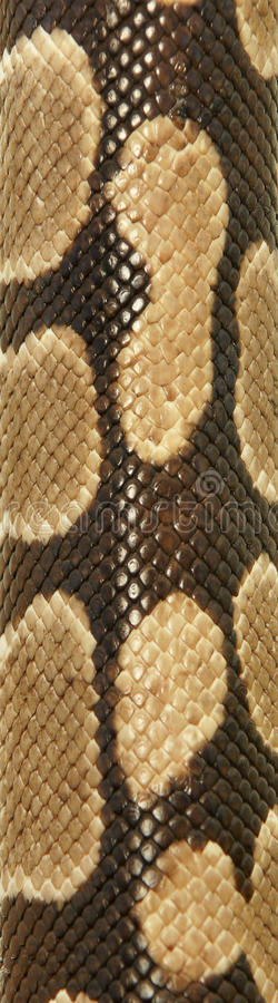 Download Snake texture stock photo. Image of background, hide - 16978056