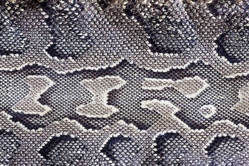Snake texture royalty free stock photos