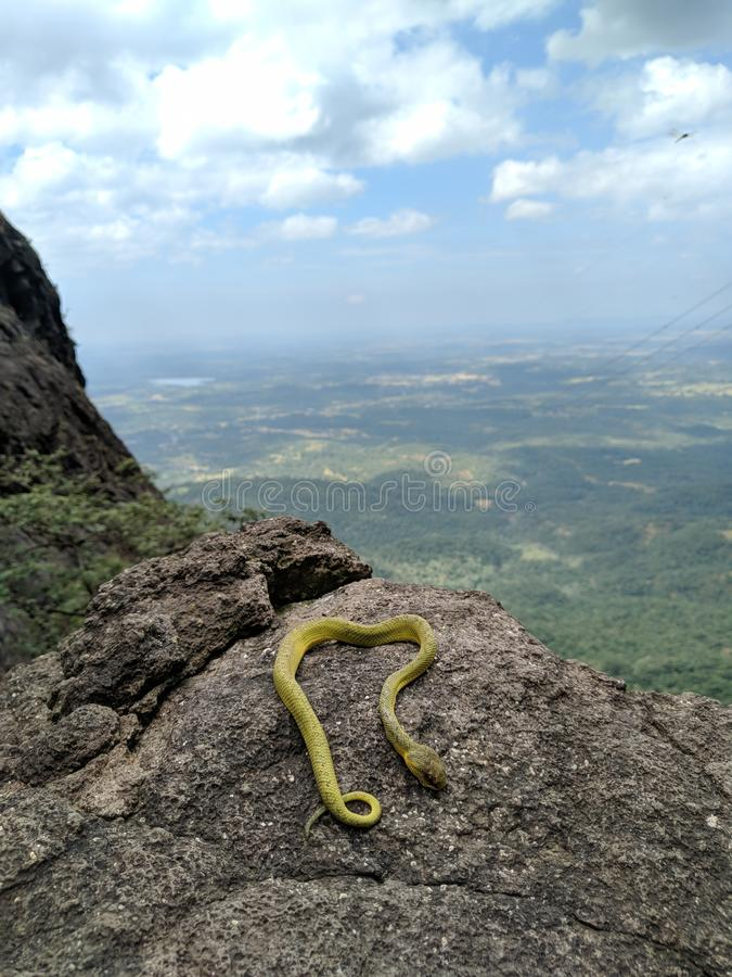 Snake in the top of mountains royalty free stock photo