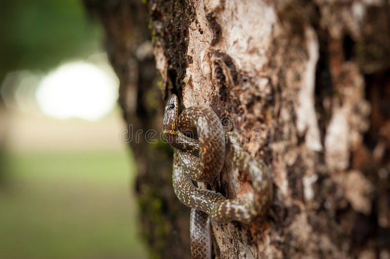Snake on the tree stock images