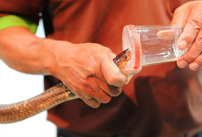 Snake venom show in zoo thailand.  stock image