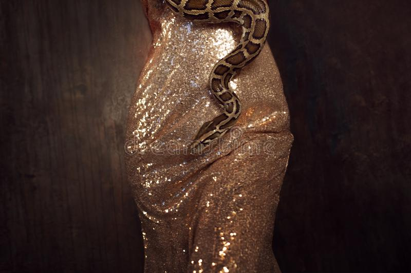 Snake wraps around the hips. Woman in a gold dress and with a snake. Beautiful brunette in a gold dress and with a snake royalty free stock image