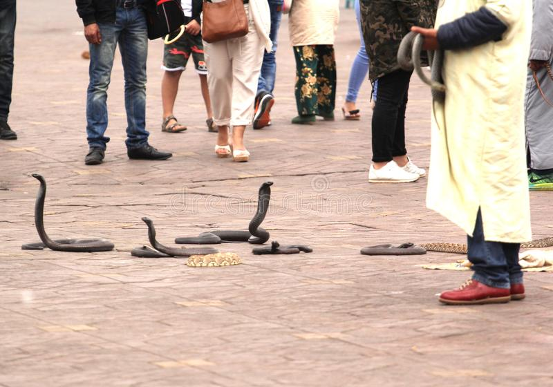 Snakes On the Lookout. Snake charmers cobra dancing at famous Marrakesh square Djemaa el Fna, Morocco stock images