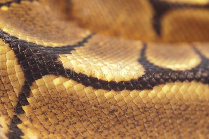 snakeskin питона шарика стоковое фото