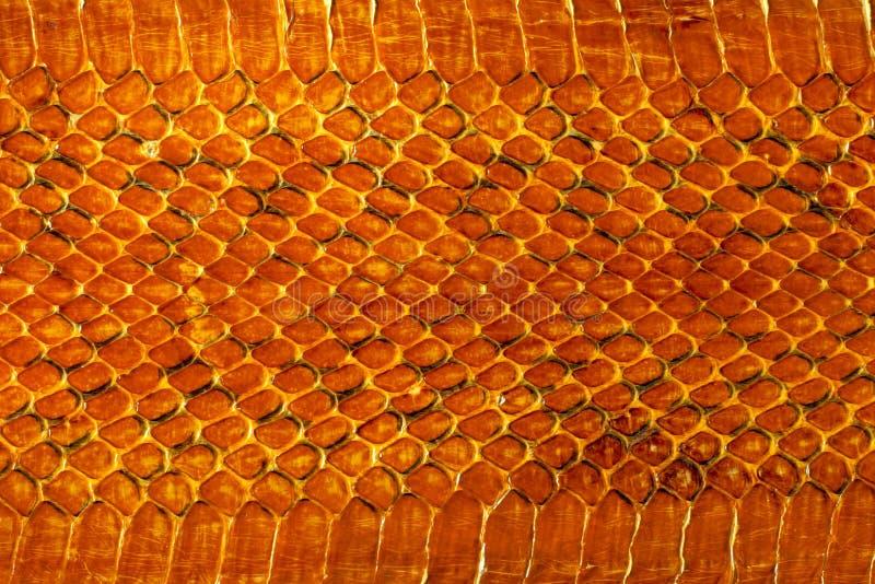 snakeskin стоковое фото
