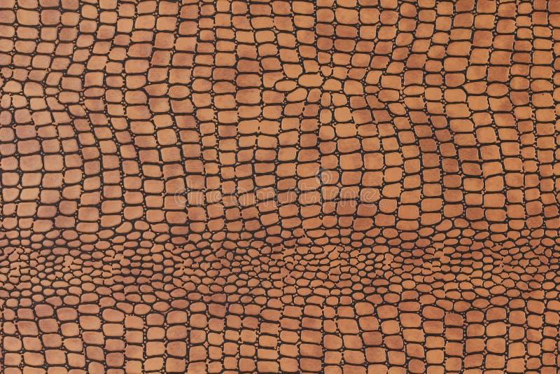 Snakeskin stock images