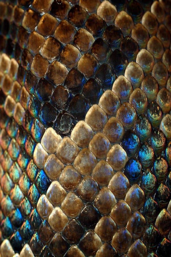 Snakeskin imagens de stock royalty free