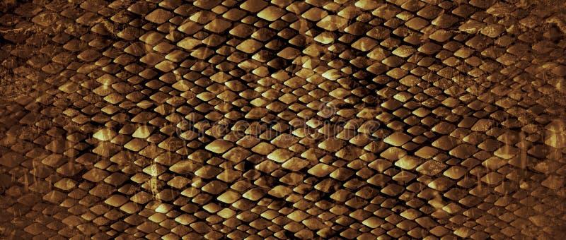 snakeskin photographie stock libre de droits