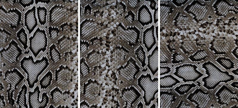 Snakeskin lädertexturer royaltyfri bild