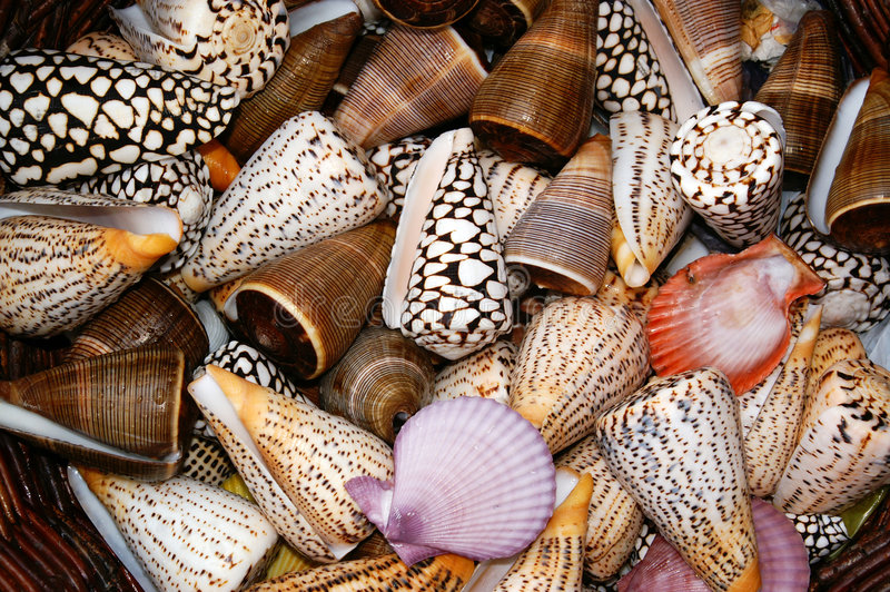 Snales and shells stock photo
