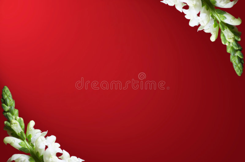 Download Snapdragon Border On Red Background Stock Photos - Image: 615393