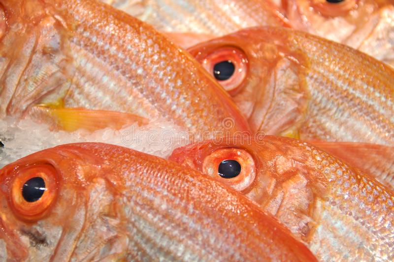 Download Snapper stock photo. Image of fresh, fishmarket, catch - 19122290