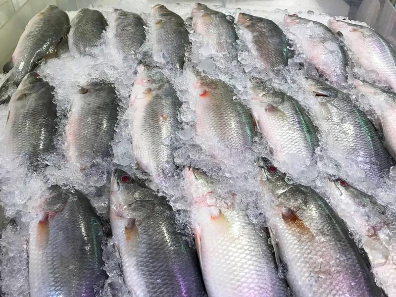 Fishes on ice shelf selling in market. Snapper fishes on ice shelf selling in market royalty free stock photo