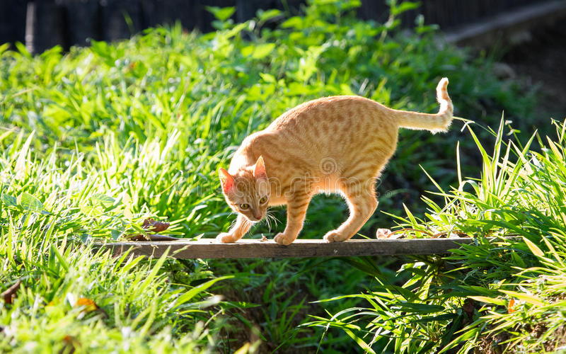 Sneaky Cat. This curious and playful cat loves this bridge because she can pounce on things perfectly from above stock photography