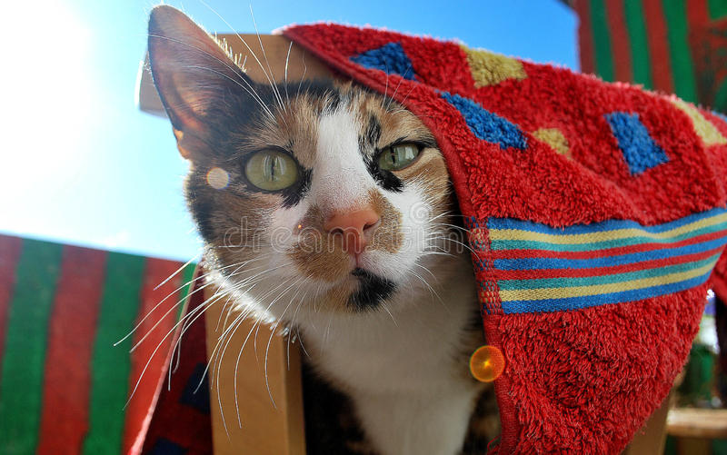 Sneaky cat. Cat on sunny balcony under towel stock image