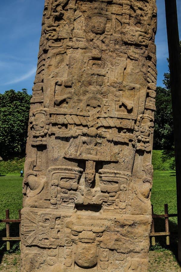 Sned Mayan stenar, Quirigua fördärvar, Guatemala royaltyfria foton
