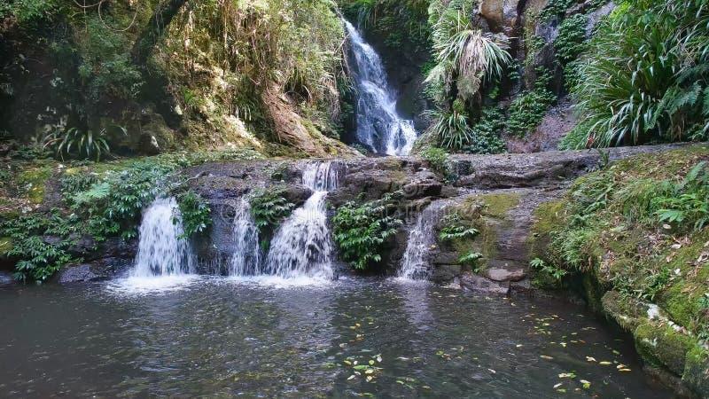 Sned sikt av elabananedgångar på lamingtonnationalparken i queensland royaltyfri foto