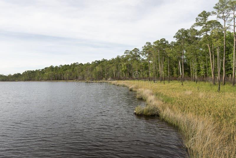 Snedstreckspinjeskog och Sawgrass livsmiljö på den Tarkiln flodarmsylten arkivfoton