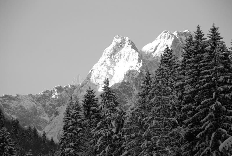 sneeuw afgedekte pieken en bomen royalty-vrije stock foto