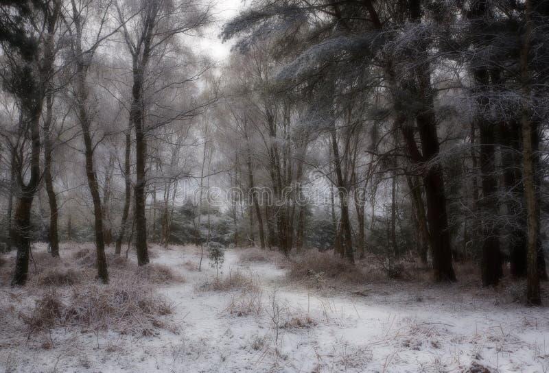 Sneeuw behandeld bos stock afbeeldingen