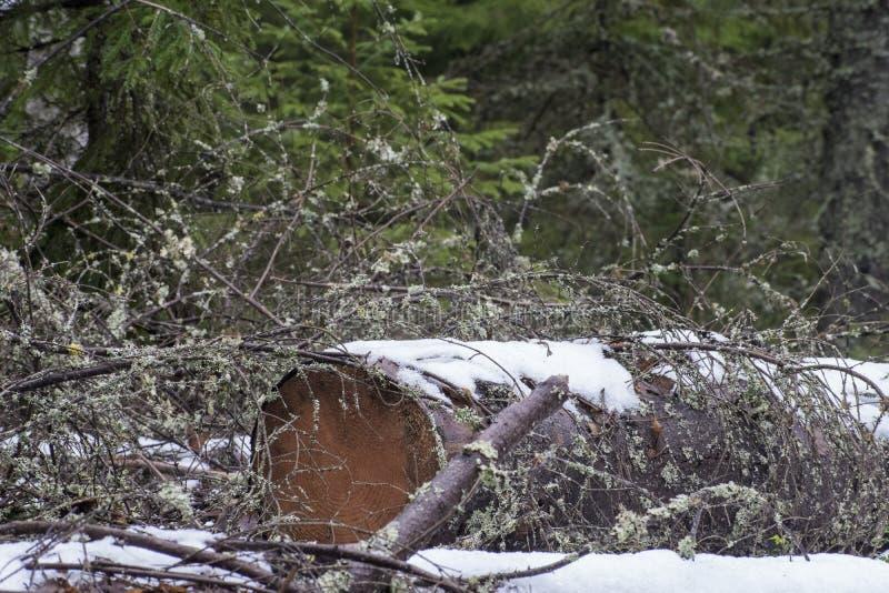 Sneeuw behandeld net login bos royalty-vrije stock afbeeldingen