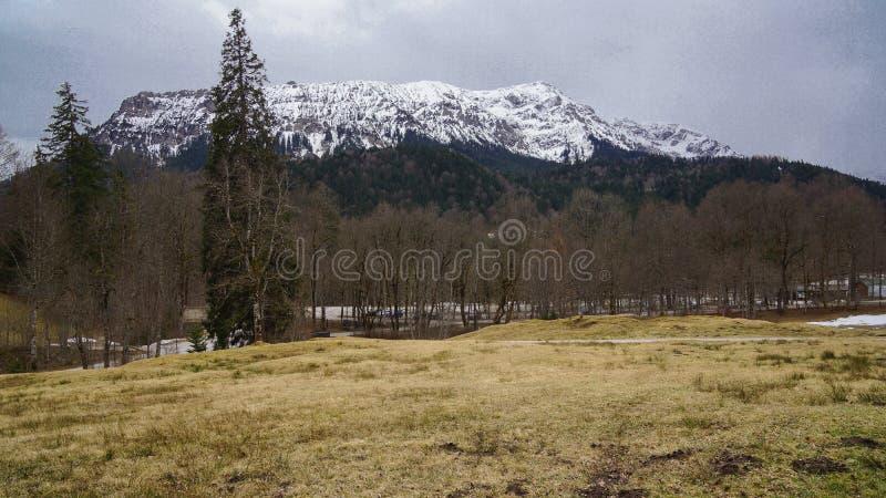 Sneeuw behandelde bergbomen en weide royalty-vrije stock fotografie