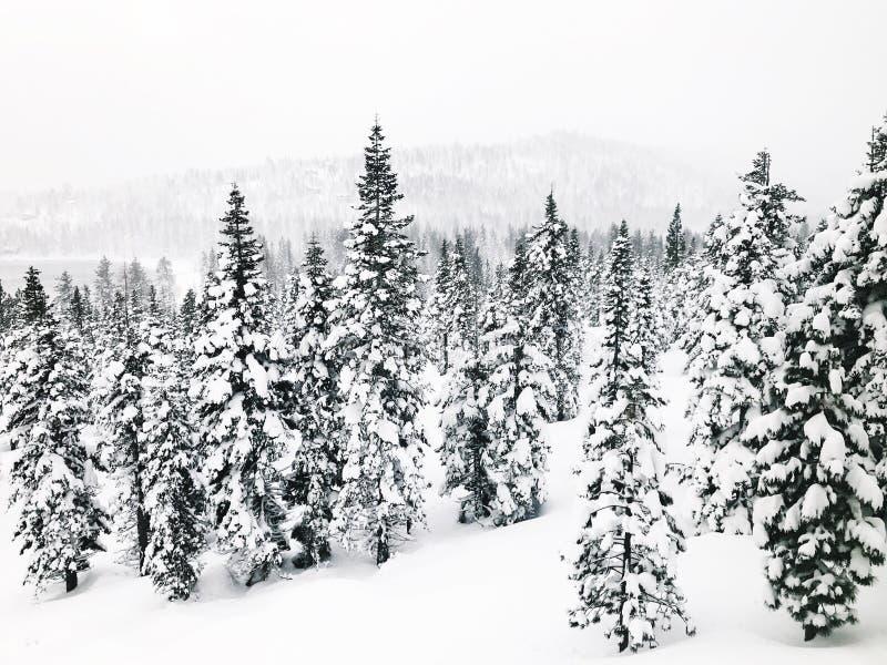 Sneeuw behandelde bergen stock afbeeldingen