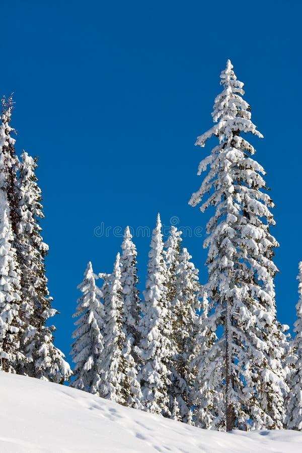 Sneeuw Behandelde Bomen Stock Foto's