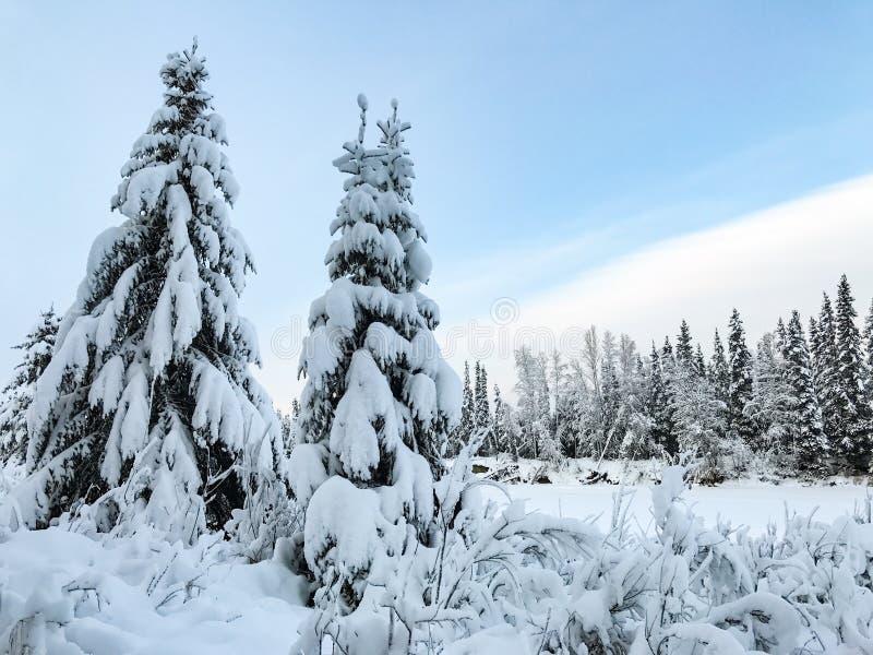 Sneeuw behandelde bomen in Alaska tijdens de winter royalty-vrije stock afbeelding