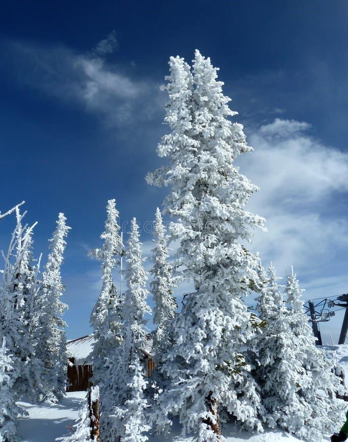 Sneeuw behandelde bomen in de winter royalty-vrije stock foto
