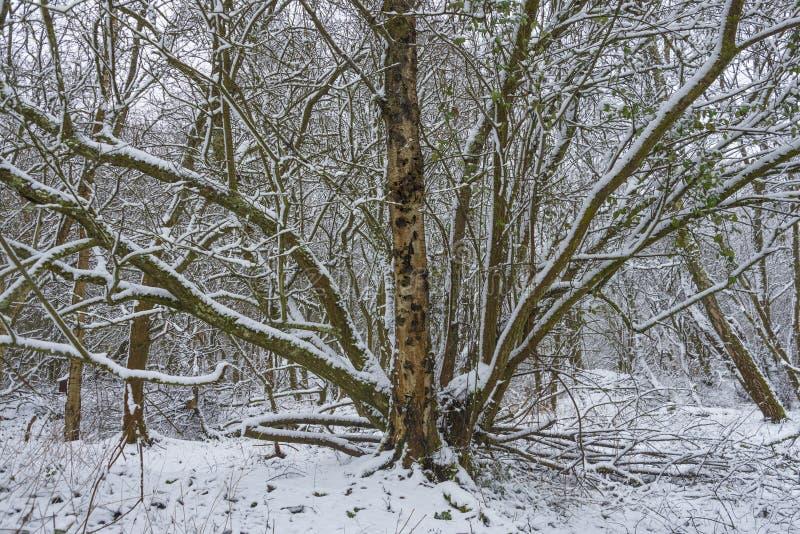 Sneeuw behandelde bomen in de winter royalty-vrije stock afbeelding