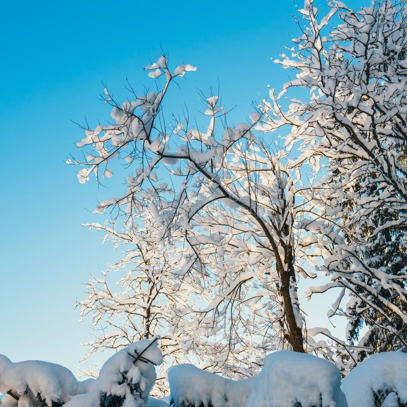 Download Sneeuw Behandelde Bomen En Blauwe Hemel Stock Afbeelding - Afbeelding bestaande uit seizoen, mooi: 107701831